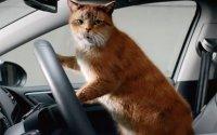 В России могут появиться новые правила перевозки животных