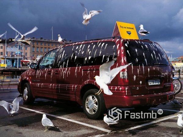 птичий помет на лобовом стекле автомобиля