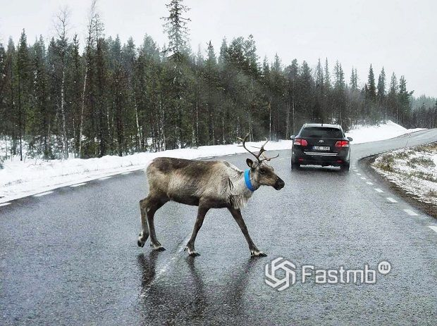 Что нужно знать для поездки на машине в Финляндию