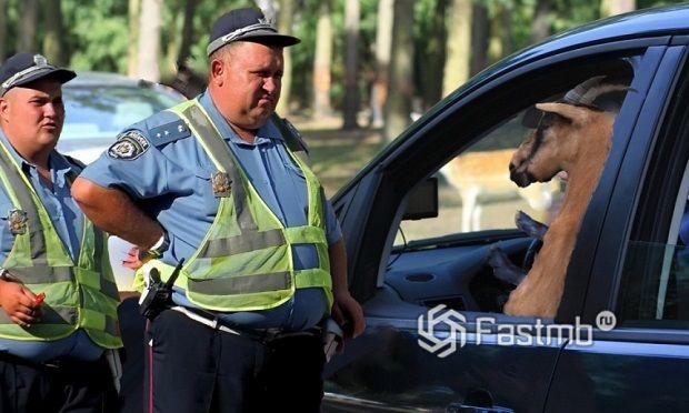 9 важных советов по общению с дорожной полицией в Украине