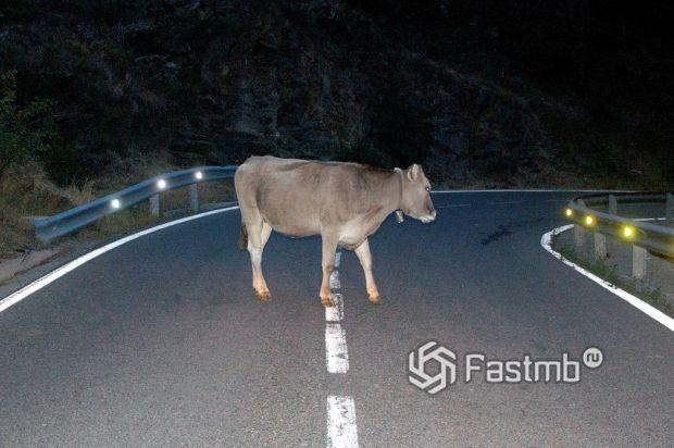 Животные на автомобильной дороге на Байкал