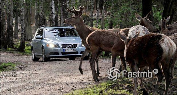 Финские водители: 13 интересных фактов