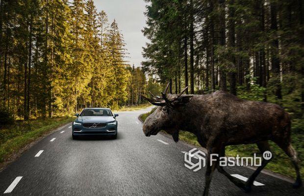Система обнаружения крупных животных на дороге